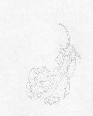 Elvira Bernhardt | Zeichnung Blüte 3