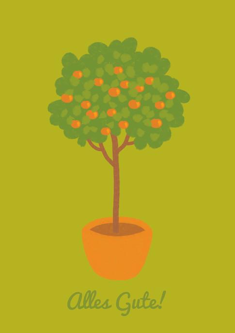 Orangenbaum_grün.jpg