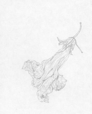 Elvira Bernhardt | Zeichnung Blüte 2