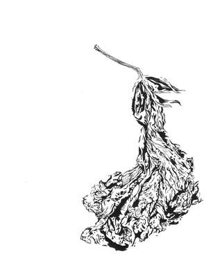 Elvira Bernhardt | Zeichnung Blüte schwarz