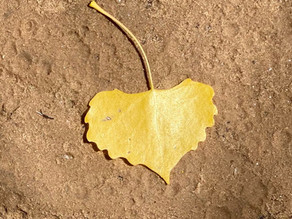 Whispers and Nudges from a yellow heart
