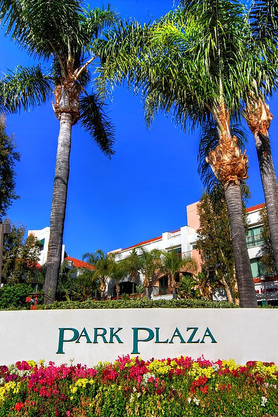 front palm trees pp.jpg