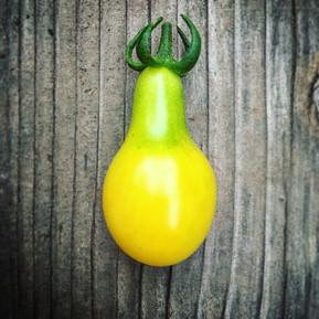 Yellow Pear Heirloom Sweetie