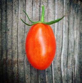 Juliet Hybrid Red Grape Tomato