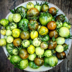 Green Zebra Heirlooms