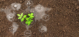 Sustainable Agriculture using Synthetic Biology