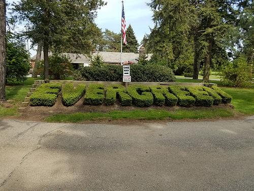 evergreen_bush.jpg