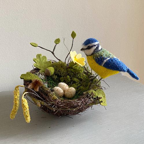 Bluebell blue tit & nest