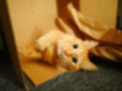 cute cat box