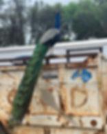 Fabio 🤩 #prettybird #fabio #peacock #fa