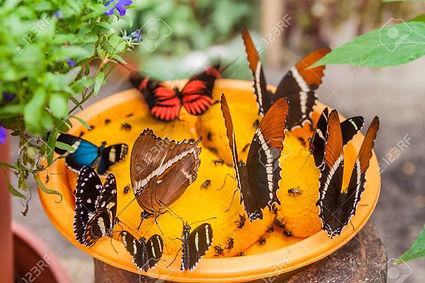 59077005-various-butterflies-feed-in-mar