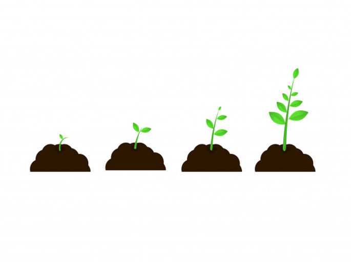 plant-grow-stages-vector-seed-growth-spe