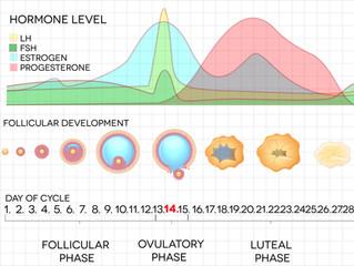 Understanding The Female Hormonal System