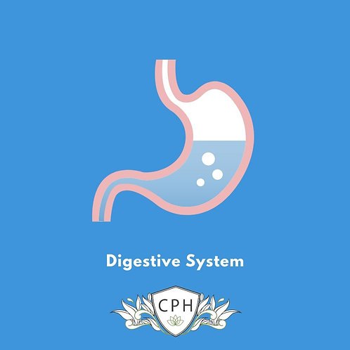 The Importance of the Digestive System Part 1