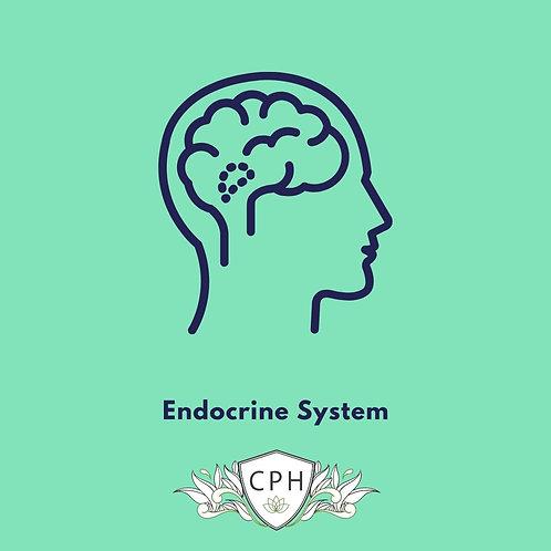 Endocrine System E Booklet By Ellen Kramer