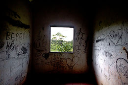 Window in the middle of the jungle