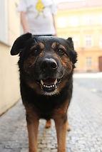 Dog in prague