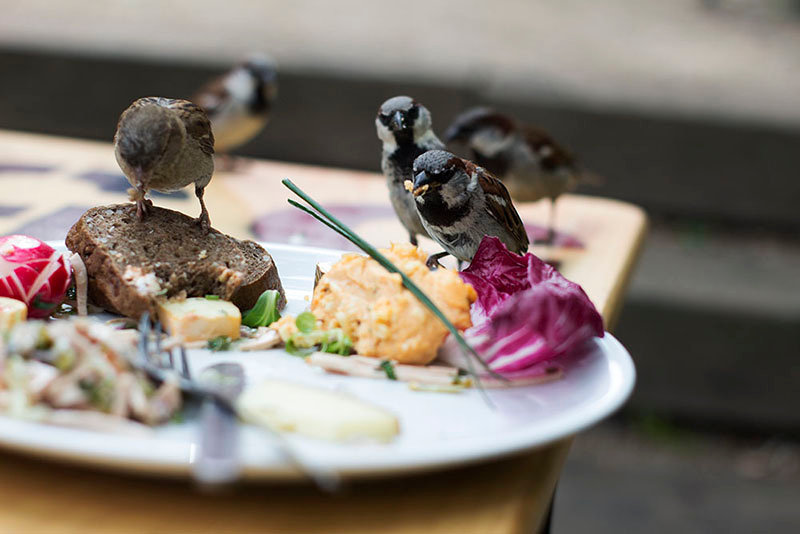 Birds eating in Berlin. EMY SATO ILLUSTRATION ILUSTRAÇAO PHOTOGRAPHY FOTOGRAFIA ART