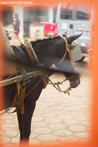 A horse in Altamira