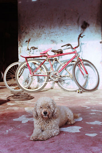 a dog and a bike, emy sato, dog photography