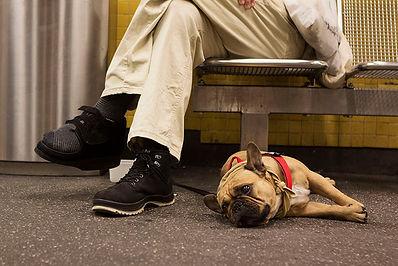 Dogs in the metro of Berlin - EMY SATO ILLUSTRATION ILUSTRAÇAO PHOTOGRAPHY FOTOGRAFIA ART