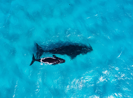 The ultimate dolphin and whale watching experience in Esperance and the Fitzgerald Coast