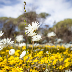 Take a trip into the Wheatbelt this weekend and explore Beacon and Bencubbin