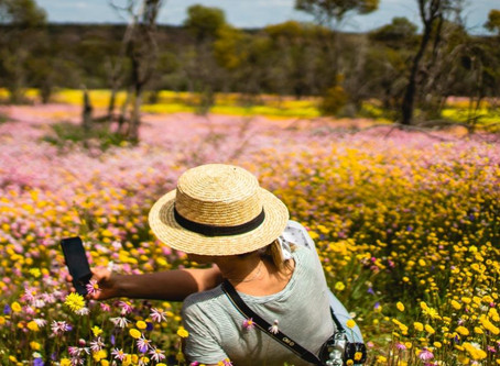 How to take the best Wildflower Photos
