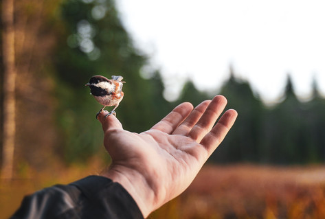 celine-nebor-oiseau-sur-main.jpg