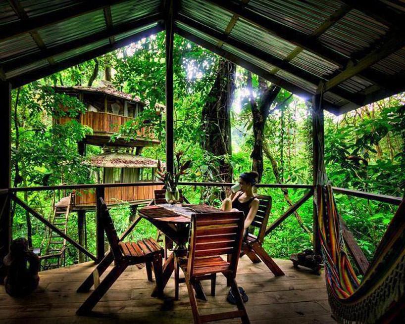 casa de árvore como hotel: Finca Bellavista
