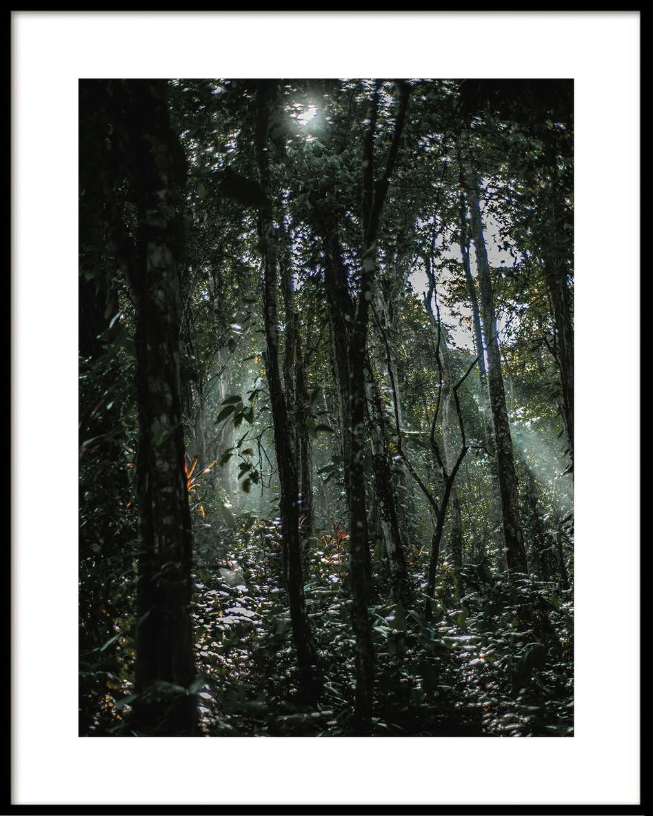 16 Costa Rica jungle