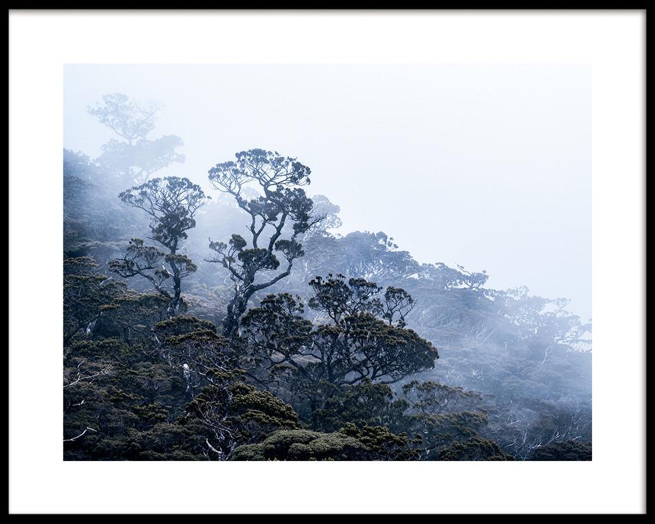 07 Borneo jungle