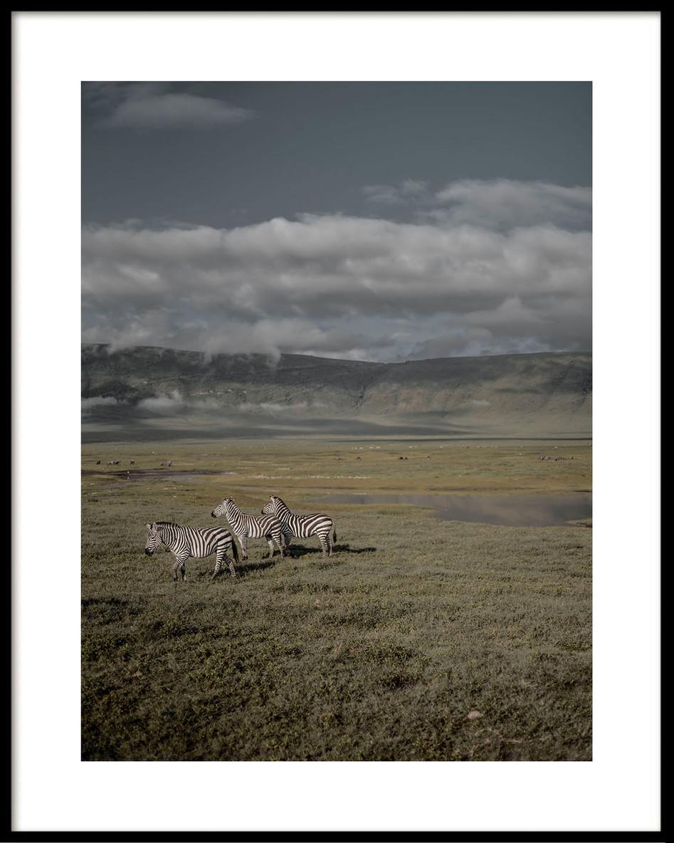 06 Ngorongoro zebras