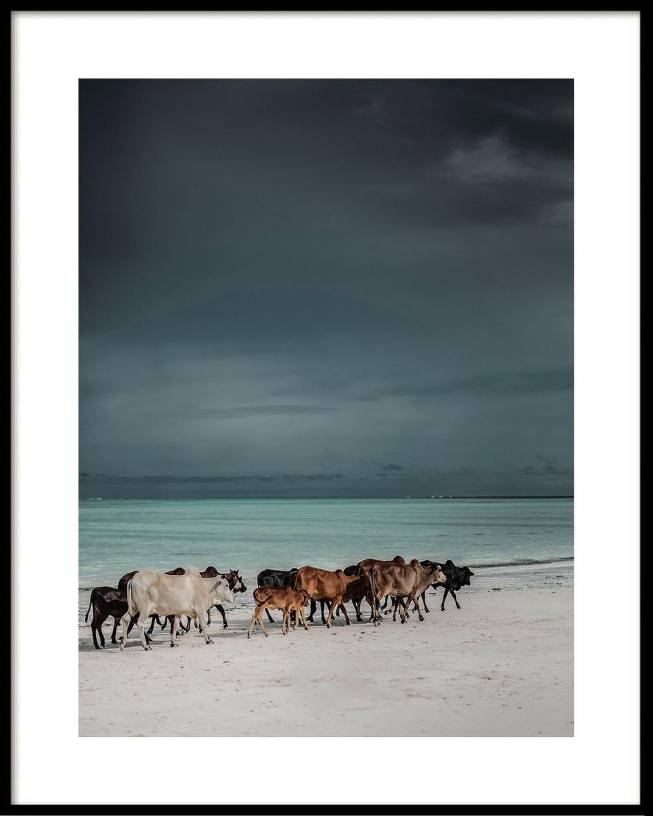 10 Beach cows