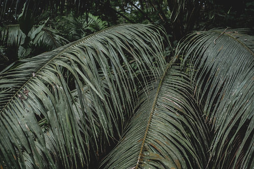 Tropical palm leafs