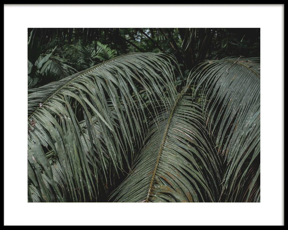 03 Sábalos palm leaves