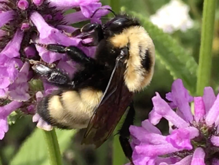 The Pollinator Connection: Bee-ginnings that have bee-gun