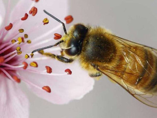The Pollinator Connection: Ways you can bee engaged