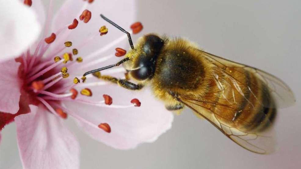 Bees are critical pollinators.