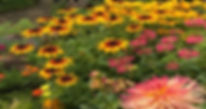 Peggy Mee's garden in Tidings_edited.jpg