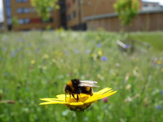 The Pollinator Connection: Bee happy anyway
