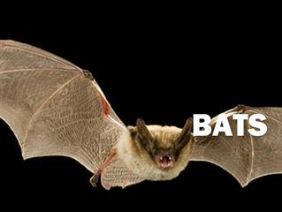 Bats as Pollinators