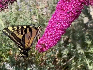 The Pollinator Connection: Even world-wide crises can't stop June blooms