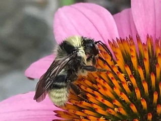 The Pollinator Connection: Bee green, bee good