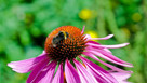 The Pollinator Connection: Be safe, bee home