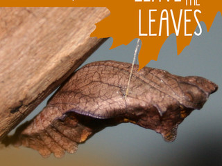 Remember to Leave the Leaves