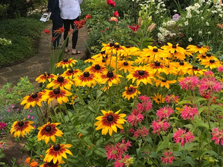 The Pollinator Connection: Bee passionate about creating bee habitat