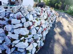 Mauer mit Hauswurzen