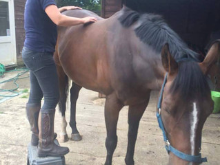 What is equine massage therapy?