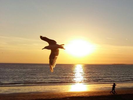 Of Gulls and Sunset